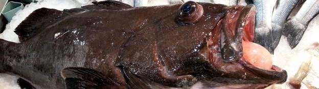 Рыба в Турции
