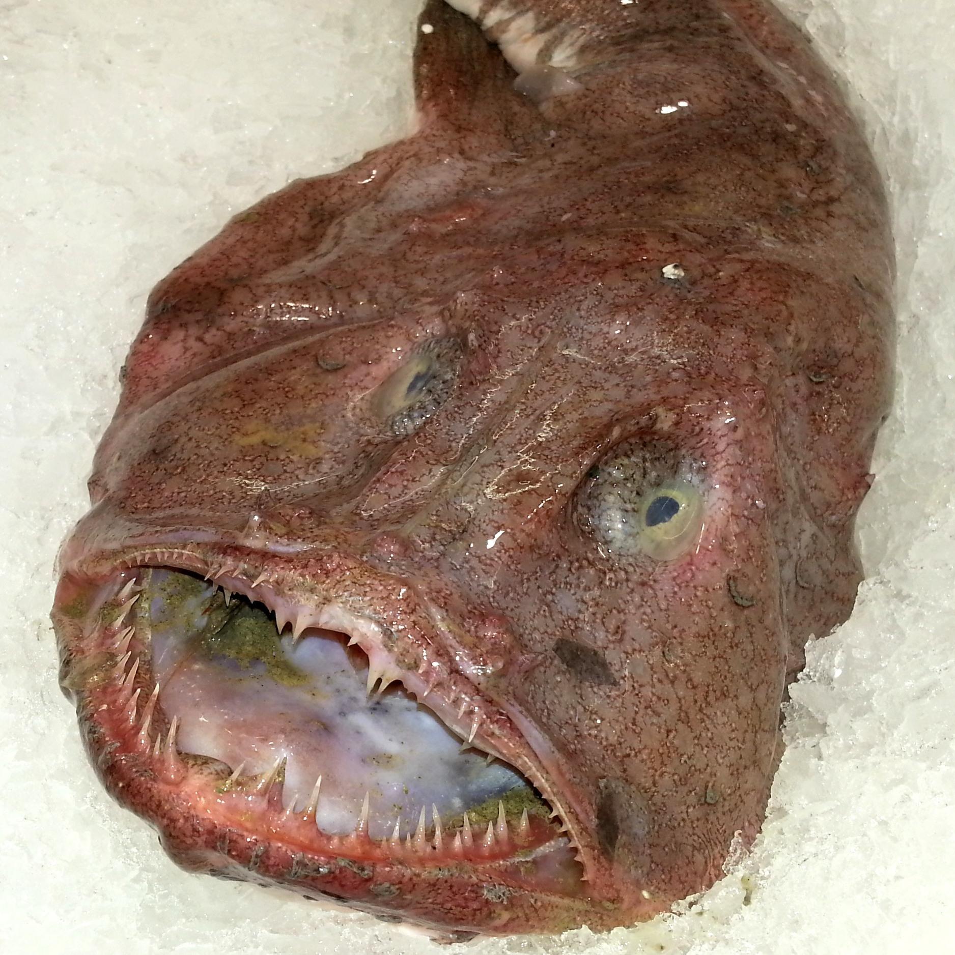 Рыба-красотка, прилавок Метро, Аланья, Турция